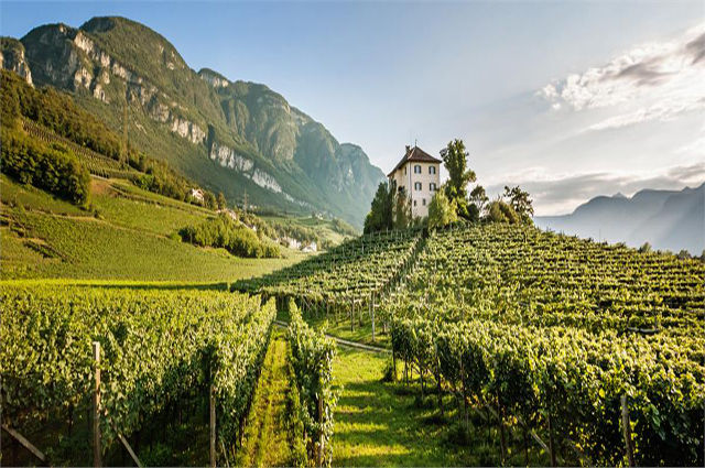 Tirol vineyard