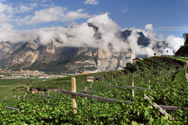 Tirol mezzacorona vineyards