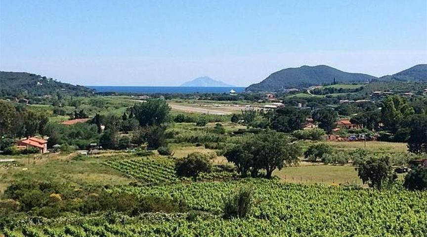 vignaioli america elba vineyard